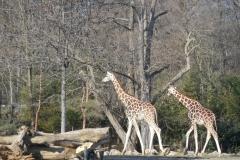 Park Zooschaufenster
