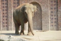 Zoo Elefant